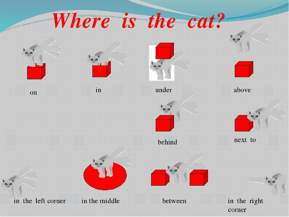 Where is the cat? on in under above behind next to in the left corner in the...