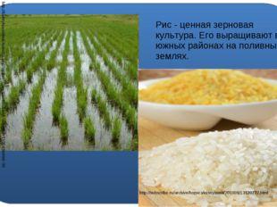 Рис - ценная зерновая культура. Его выращивают в южных районах на поливных з