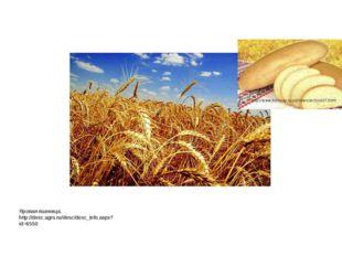 Яровая пшеница. http://desc.agro.ru/desc/desc_info.aspx?id=6550 http://www.ko