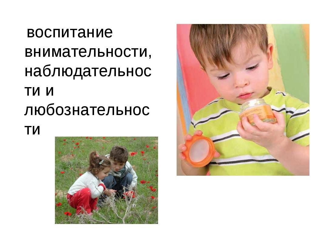 воспитание внимательности, наблюдательности и любознательности