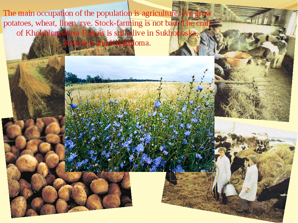The main occupation of the population is agriculture. We grow potatoes, wheat...