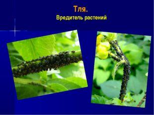 Тля. Вредитель растений