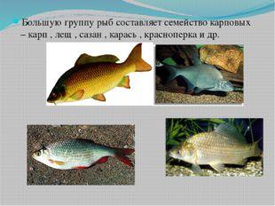 Большую группу рыб составляет семейство карповых – карп , лещ , сазан , карас