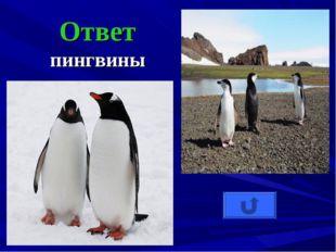 Ответ пингвины