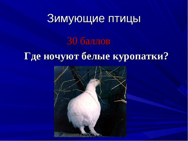Зимующие птицы 30 баллов Где ночуют белые куропатки?