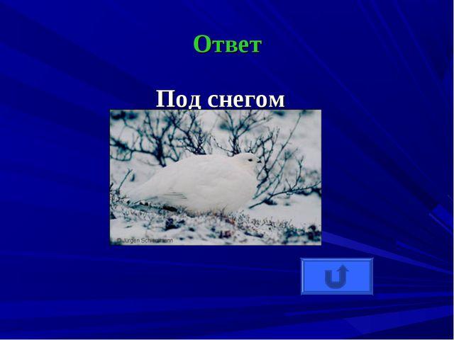 Ответ Под снегом