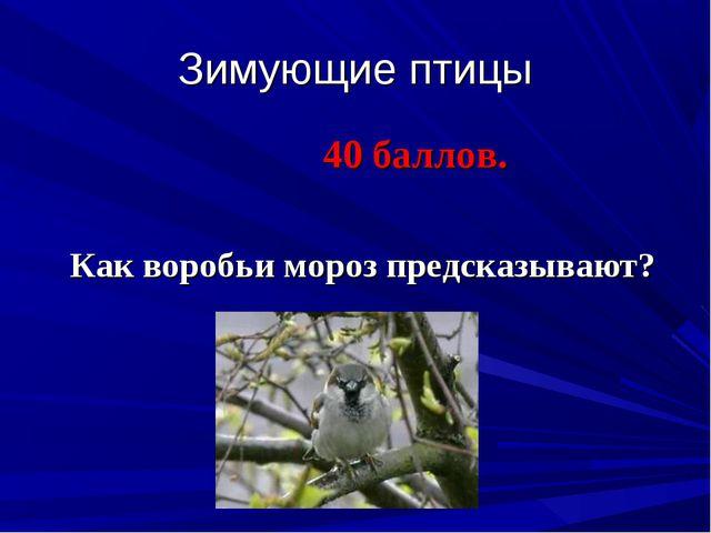 Зимующие птицы 40 баллов. Как воробьи мороз предсказывают?