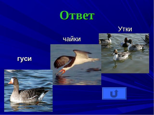 Ответ Утки чайки гуси