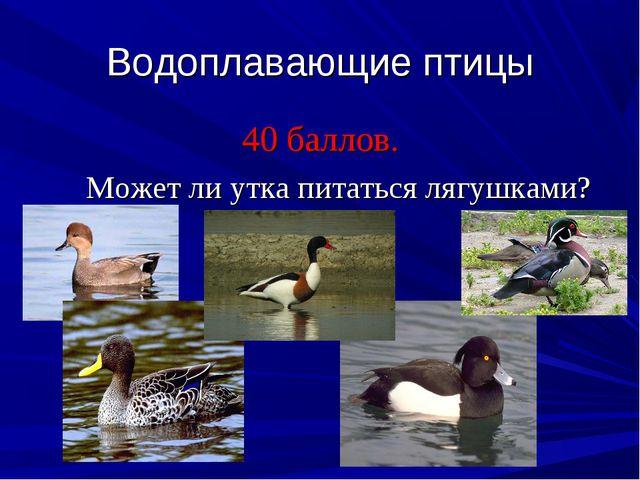 Водоплавающие птицы 40 баллов. Может ли утка питаться лягушками?
