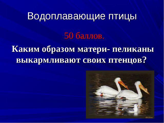 Водоплавающие птицы 50 баллов. Каким образом матери- пеликаны выкармливают св...