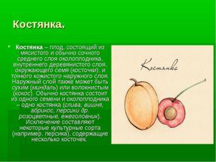 Костянка. Костянка– плод, состоящий из мясистого и обычно сочного среднего с
