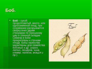 Боб. Боб– сухой, продолговатый, много- или односемянной плод, при созревании