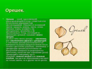 Орешек. Орешек – сухой, односемянной, нераскрывающийся плод с кожистым или б