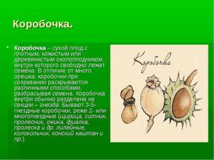 Коробочка. Коробочка– сухой плод с плотным, кожистым или деревянистым околоп