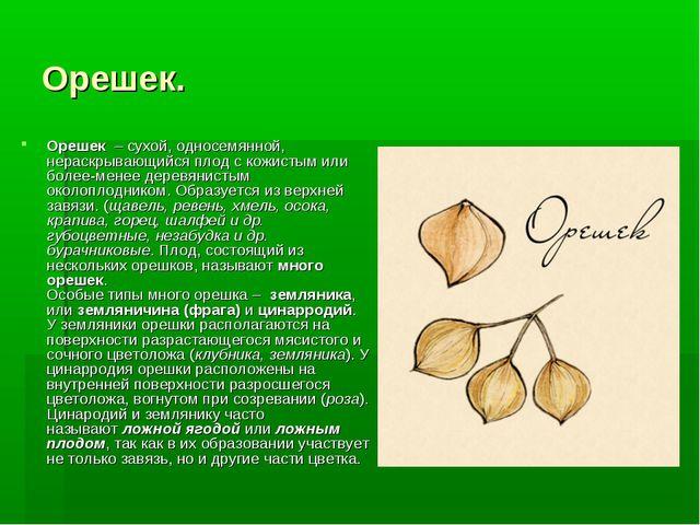 Орешек. Орешек – сухой, односемянной, нераскрывающийся плод с кожистым или б...