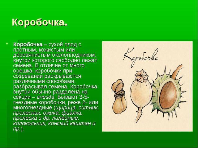 Коробочка. Коробочка– сухой плод с плотным, кожистым или деревянистым околоп...