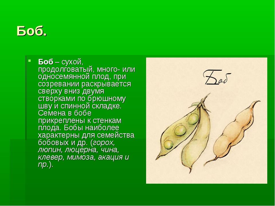 Боб. Боб– сухой, продолговатый, много- или односемянной плод, при созревании...