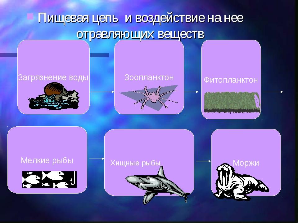Загрязнение воды Зоопланктон Фитопланктон Мелкие рыбы Хищные рыбы Моржи Пищев...