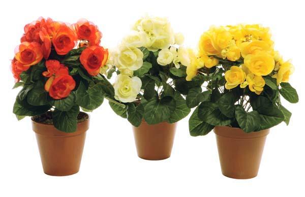 http://domflowers.ucoz.ru/_ph/28/454802399.jpg