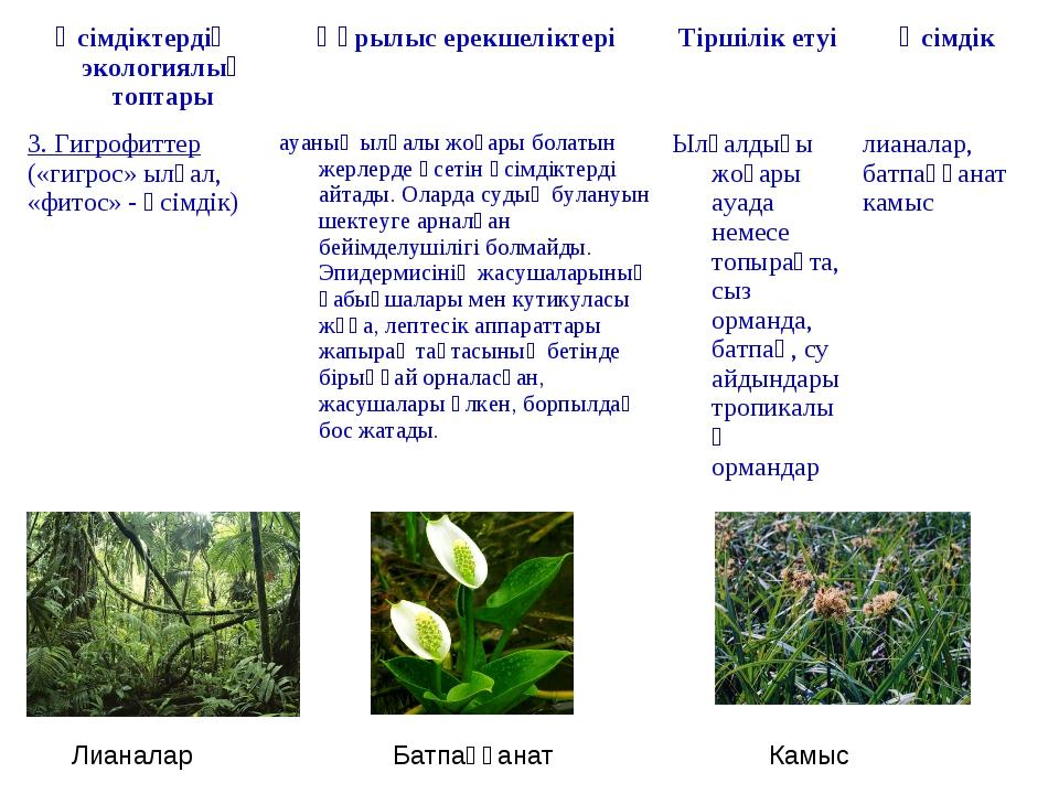 Лианалар Батпаққанат Камыс Өсімдіктердің экологиялық топтарыҚұрылыс ерекшелі...