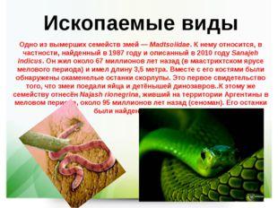 Ископаемые виды Одно из вымерших семейств змей—Madtsoiidae. К нему относитс