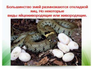 Большинство змей размножаютсяоткладкой яиц. Но некоторые видыяйцеживородящи