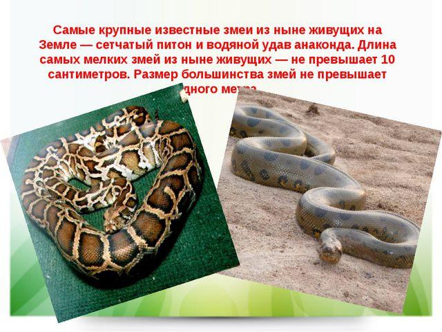Самые крупные известные змеи из ныне живущих на Земле—сетчатый питони водя...