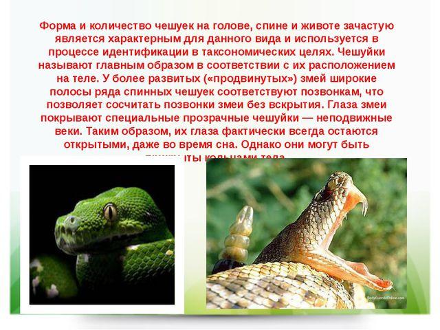 Форма и количество чешуек на голове, спине и животе зачастую является характе...
