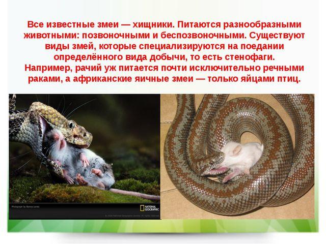 Все известные змеи—хищники. Питаются разнообразными животными:позвоночными...