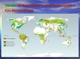 Обитают на Мадагаскаре, в тропической Африке и Юго-Восточной Азии.
