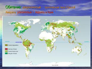 Обитание: широконосые - тропические леса Южной Америки, узконосые – Африка и