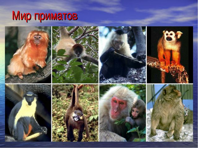 Мир приматов
