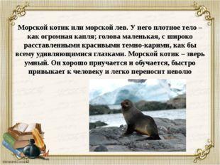 Морской котик или морской лев. У него плотное тело – как огромная капля; голо