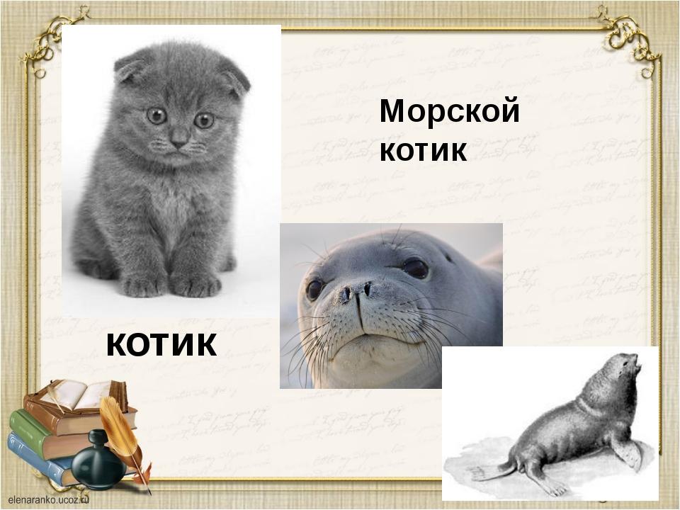 котик Морской котик