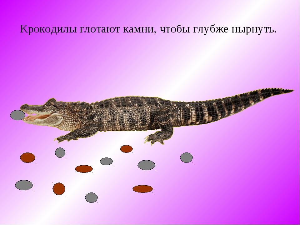 Крокодилы глотают камни, чтобы глубже нырнуть.