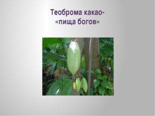 Теоброма какао- «пища богов»