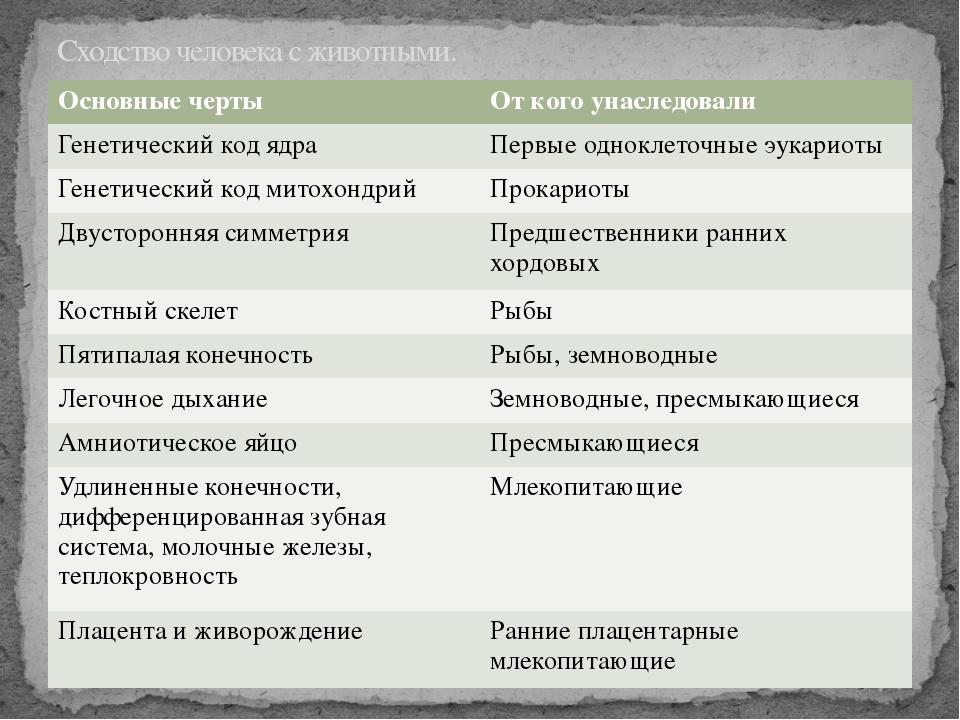 Сходство человека с животными. Основные черты От кого унаследовали Генетическ...