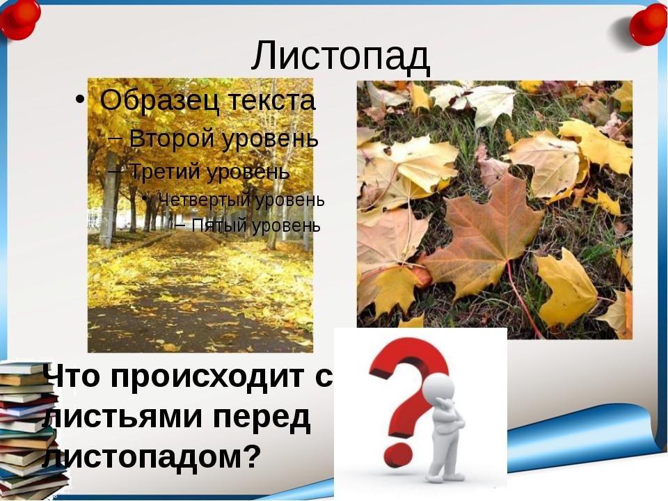 Листопад Что происходит с листьями перед листопадом?