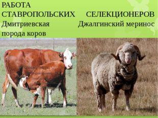 РАБОТА СТАВРОПОЛЬСКИХ СЕЛЕКЦИОНЕРОВ Дмитриевская Джалгинский меринос порода к