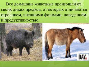 Все домашние животные произошли от своих диких предков, от которых отличаютс