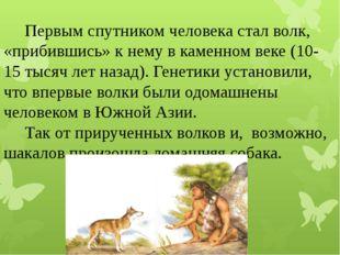 Первым спутником человека сталволк, «прибившись» к нему в каменном веке (10