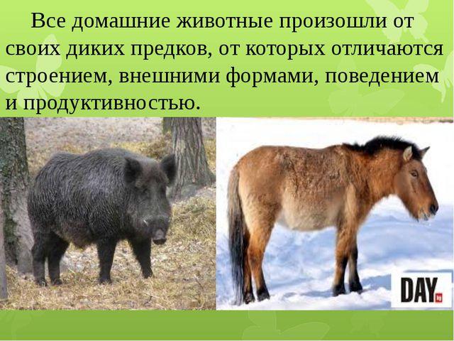 Все домашние животные произошли от своих диких предков, от которых отличаютс...