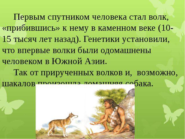 Первым спутником человека сталволк, «прибившись» к нему в каменном веке (10...
