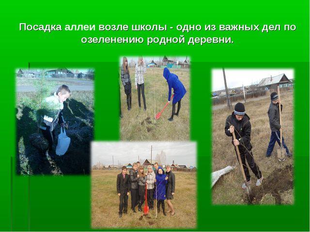 Посадка аллеи возле школы - одно из важных дел по озеленению родной деревни.