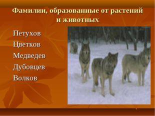 Фамилии, образованные от растений и животных Петухов Цветков Медведев Дубовце