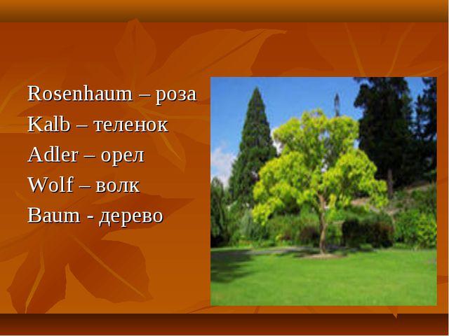 Rosenhaum – роза Kalb – теленок Adler – орел Wolf – волк Baum - дерево