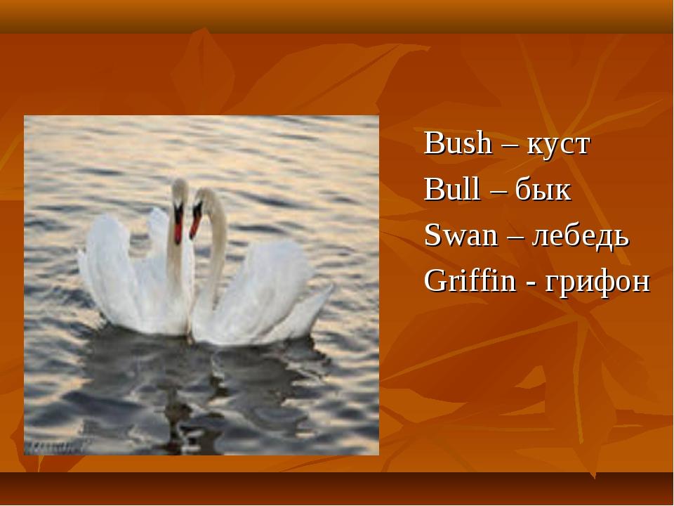 Bush – куст Bull – бык Swan – лебедь Griffin - грифон