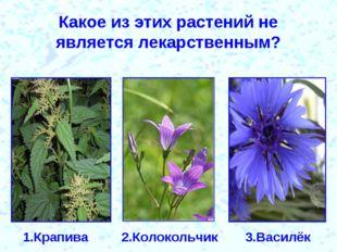 Какое из этих растений не является лекарственным? 1.Крапива 2.Колокольчик 3.В