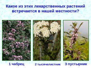 Какое из этих лекарственных растений встречается в нашей местности? 1 чабрец