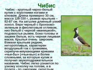Чибис Чибис - крупный черно-белый кулик с короткими ногами и клювом. Длина пр